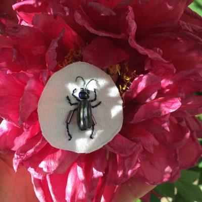 Journée entomologie au groupe textile